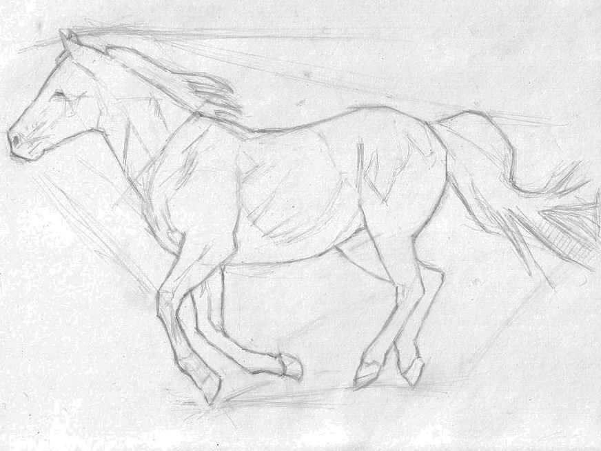 Learn How to Sketch a Horse